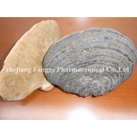 Buy cheap phellinus igniarius extract 20%-40%, edible and medicinal mushroom,GMP/HACCP certificate from Wholesalers