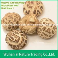 China Wholesale Dried White Flower Shiitake Mushroom on sale