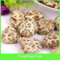 China China Dry Cultivated Flower Shiitake Mushroom on sale