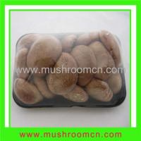 China Fresh smooth shiitake---small tray packing on sale