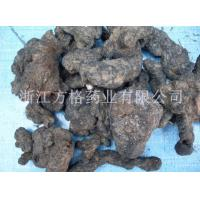 Buy cheap polyporus umbellatus extract 20%-50%,GMP/HACCPcertificate from Wholesalers
