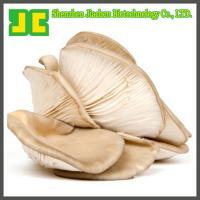 China High quality Maitake mushroom extract, 100% natural Maitake mushroom extract on sale