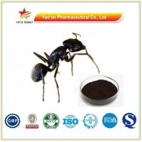 Buy cheap Factory Supply Black Ant Extract/Wholesale Polyrhachis Extract from wholesalers