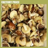 Buy cheap Mushrooms & Truffles Marinated Suillus Luteus Mushroom from Wholesalers