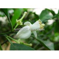 Buy cheap Feverfew Extract/ Tanacetum Parthenium /CAS NO.: 29552-41-8 from Wholesalers