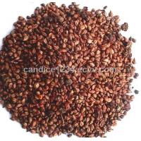 Buy cheap OPC 95% grape seed extract in powder from Wholesalers