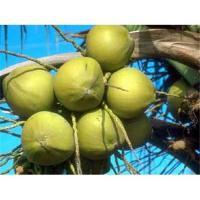 China Natural Light Yellow Fine Powder Serenoa Serrulata Extract , fatty Acid on sale