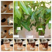 Buy cheap alginic acid fertilizer use from Wholesalers