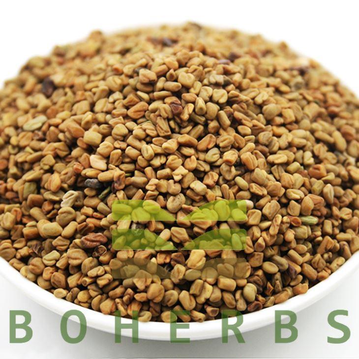 China Trigonellae Semen Fenugreek Seed Methi Seeds Fenugreek Herb Hu Lu Ba on sale