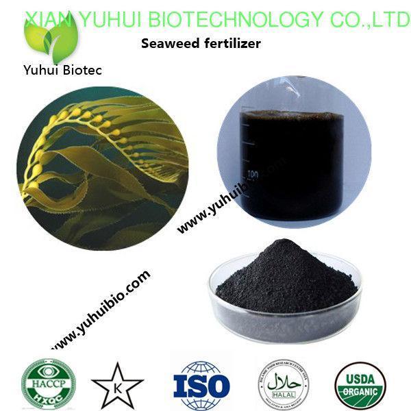 China best seaweed fertilizer,liquid kelp organic seaweed fertilizer, seaweed base fertilizer on sale
